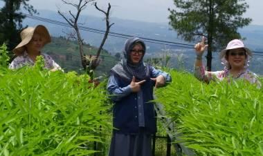 Mba Tutut : Perbedaan Memperkaya Indonesia Kita