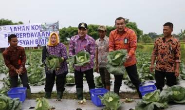 Panen Kol dan Oyong, Bupati Zaki Sebut Ekonomi Petani Naik