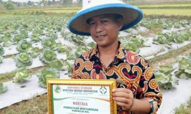Kini Tanam Sayuran Tak Harus di Daerah Dingin, Petani di Mekar Baru Tangerang Sukses Kembangkan Kol