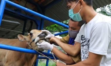 Idul Adha Saat Pandemi, Begini Prosedur Potong Hewan Kurban Di Kota Tangerang