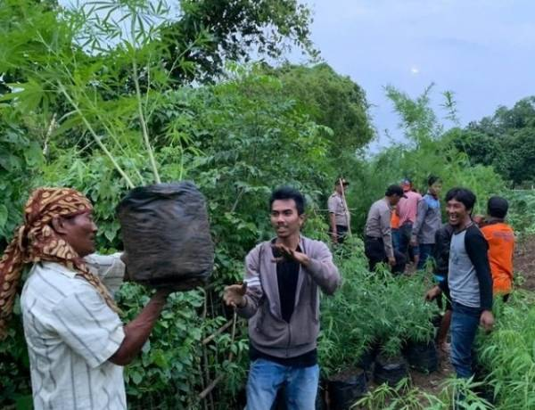 Kebun Ganja Ditemukan di Waduk Jatiluhur, Petaninya Mahasiswa