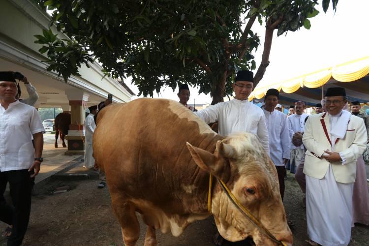 Walau Rugi, Bank Banten Berikan Kurban 2 Ekor Sapi
