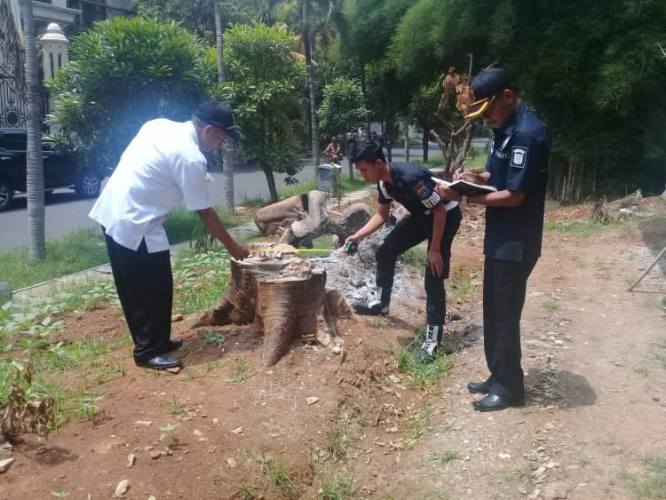 Pelaku Penebangan Pohon di Lahan Aset Terancam Di Penjara