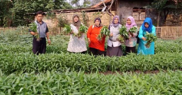 Lahan Ditengah Kota Tangerang Disulap Jadi Kampung Sehat, Emak-emak Panen Bayam
